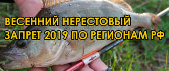 весенний нерестовый запрет 2019