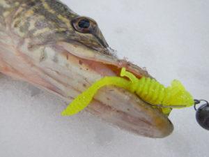 Зимняя ловля на силиконовые приманки