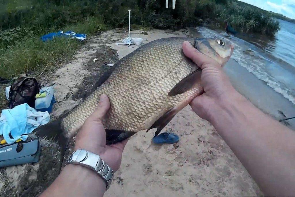 Особенности ловли рыбы в водохранилищах и каналах