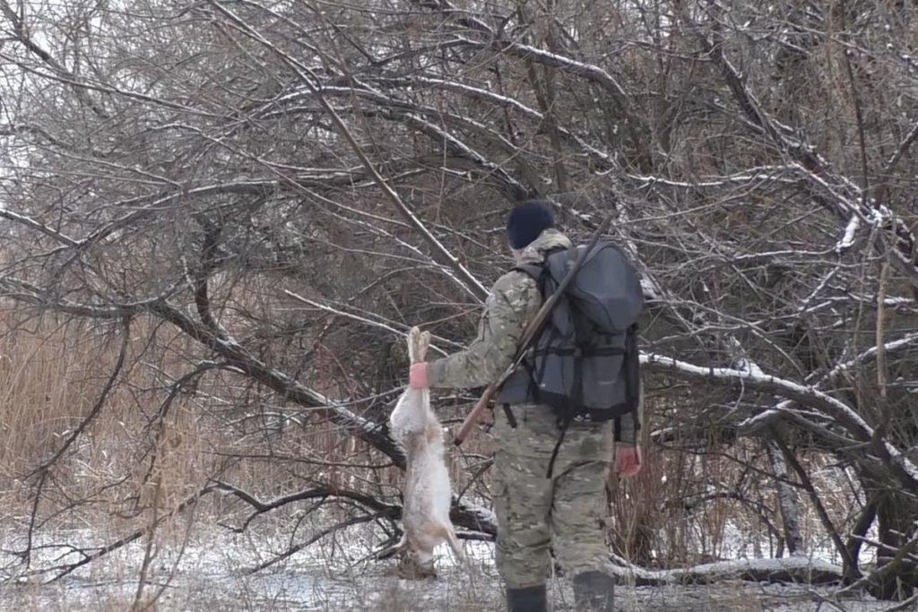 Как нужно охотиться на зайцев зимой