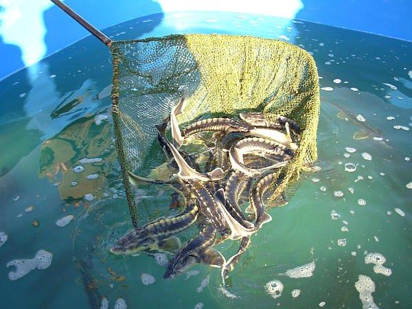 рыбалка выпускать рыбу