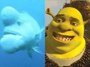Найдена самая уродливая рыба в океане