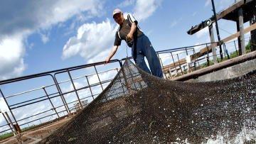 В Татарстане построят рыбохозяйственный комплекс стоимостью 2 млрд руб