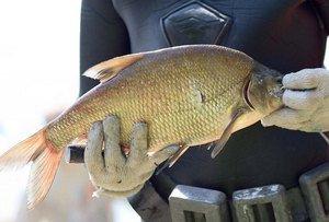 Пермяк поймал рекордную рыбу