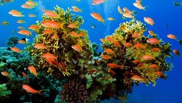 Биологи выяснили, по каким правилам формируется стая рыб