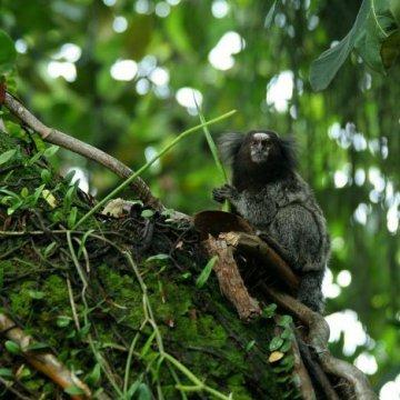 Ранее неизвестные ученым животные и растения бассейна Амазонки