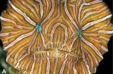 Учёные обнаружили психоделическую рыбу