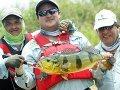 В Венесуэле стартует национальный чемпионат по ловле павлиньевого окуня