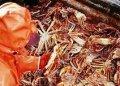 Рыбопромысловая компания на Камчатке оштрафована за браконьерскую добычу десятков тонн краба