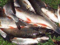 Сыктывкарский браконьер за незаконную рыбалку заплатит двухсоттысячный штраф