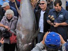 В США пойман новый рекордный желтоперый тунец