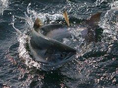 Решение о создании рыбопромысловых участков на нерестовых реках Сахалина принято
