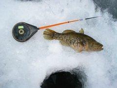 Сотрудники «Рязаньэнерго» поучаствовали в подледном лове рыбы