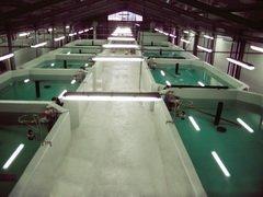 В этом году Астраханская область может вырастить 20 тысяч тонн рыбы