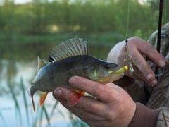 В Алматинской области прошел кубок по спортивному рыболовству