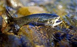 Запрет на рыбную ловлю 2011 в Башкирии