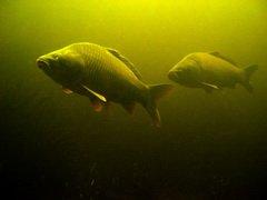 В Тверской области вступил в силу полный запрет на ловлю рыбы
