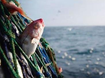 Рыбная отрасль противостоит плану Европейского Союза по сокращению чрезмерного лова
