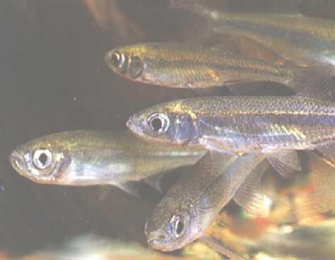 Экологи выпустили 5 млн личинок рыб в два озера центральной Якутии