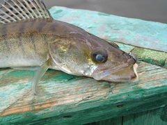 В Тольятти более двадцати рыбаков боролись за звание лучшего