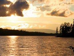 Усиливающееся подкисление воды – угроза всему рыболовству