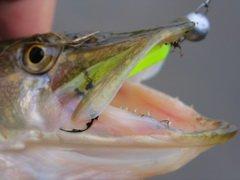 В Кривом Роге определен последний лучший рыбак года