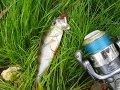 На самом большом новосибирском озере активно занялись воспроизводством рыбы