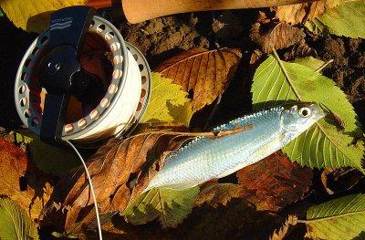 Подборка фото рыболовной тематики (8 шт.)