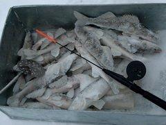 Любители рыбалки соберутся в СахНИРО