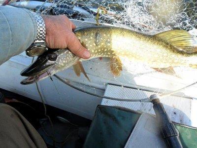 Немного о рыбалке