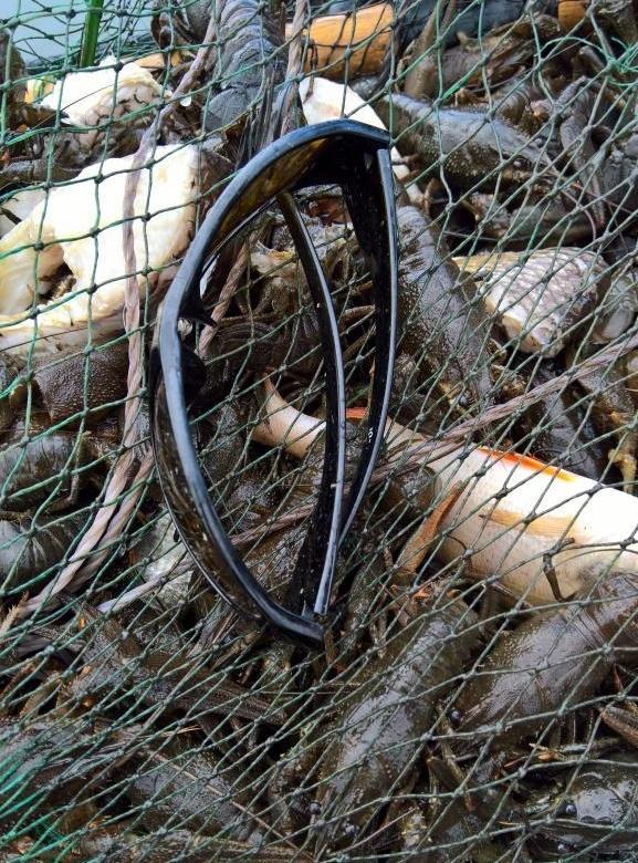 Браконьеры уничтожили крупных раков в Каме. Активисты бьют тревогу