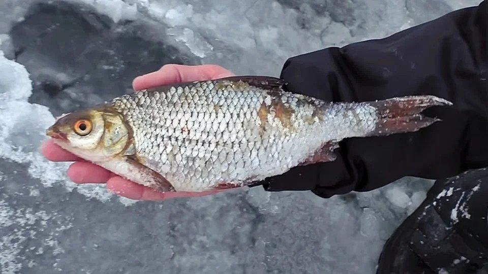 Ловля рыбы зимой на снасть покаток